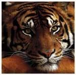 Tecido Quadrado Digital 49 X 49cm - Tigre