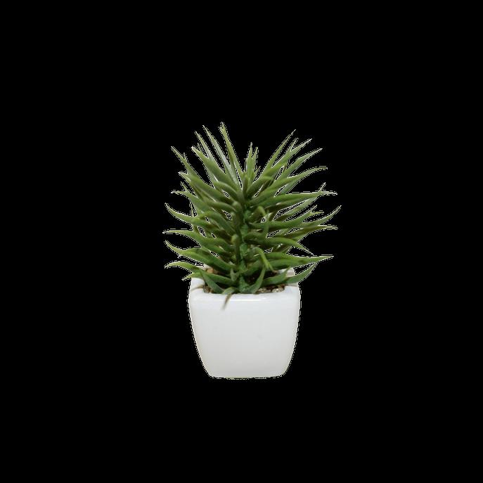 Vaso Branco com Suculenta Espada Verde