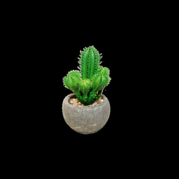 Vaso com Suculenta Cacto Verde
